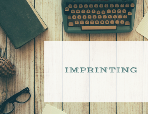 Imprinting: free services and financing to start your business.